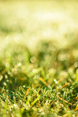 Nature Background with drops of dew on a fresh green grass with beautiful bokeh effect
