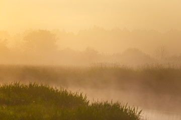 Yellow light on foggy morning in summer. Foggy texture