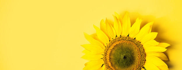 Beautiful sunflower on yellow background. Long banner format.