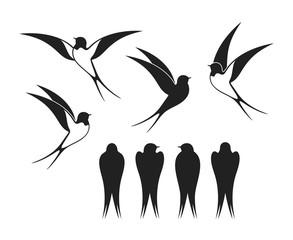 Swallow logo. Isolated swallow on white backgroun. Bird