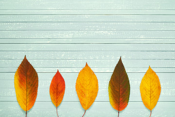 Autumnal frame for your idea and text. In autumn falled dry leaves of yellow, red, orange, lined in the middle of the frame on an old wooden board of soft blue. Model of autumn. View from above