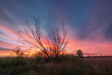 Landscape with dry wood over deep color sunset in summer time.