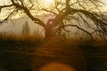 Залитое солнцем раскидистое дерево на закате
