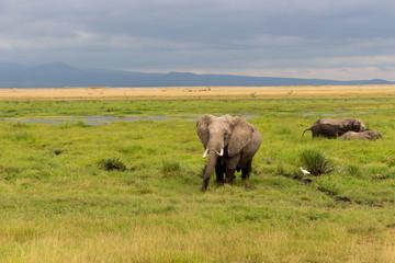 Elephants in Kenia, Africa