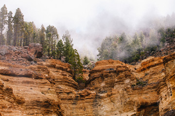 Mystic mist in the hills of Mt. Teide National Park