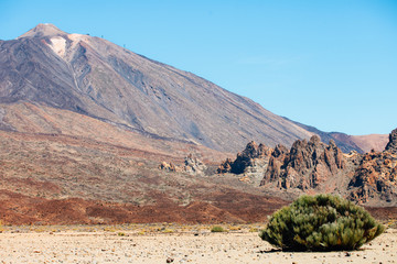 Highest peak of Volcano Mount Teide with desert lonely bush in front of landscape. Tenerife, Canary islands