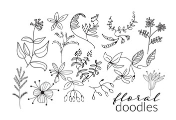 vector collection of botanical hand drawn doodles. meadow plants and flowers elements. pencil ink sketch of flowers and leaves. set of decorative elements