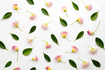 Floral arranged composition with persian silk tree flowers and lush green leaves on white background .Flatly pattern with pink siris. Flat lay, top view.