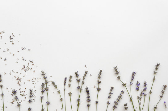 Dried lavender isolated on white background. lavender template background mockup
