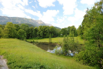 Fascinating, large-format types of green meadows, edges and the woods Alpine the foothills in summertime