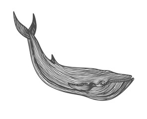 Graphical hand painted whale