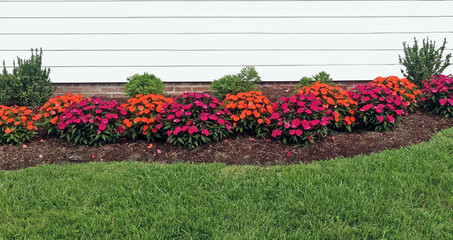Red and orange summer impatiens bordering home with green grass in foreground.
