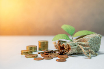 Gold coins stacked and spilling out of money bag with green plant on white table. Saving money for future concept. Business and currency background