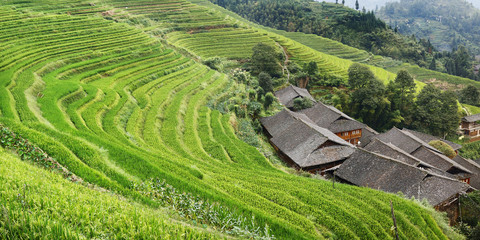 Traditional chinese house in the middle of rice filed terrace in the countryside of china Wall mural