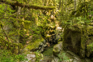 rocky creek with clear water and big rocks inside lush forest