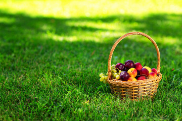 Closeup basket of ripe fruits at green garden grass background.