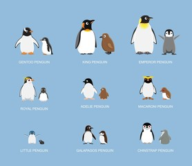 Penguin Babies Cartoon Emotion faces Vector Illustration
