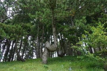 strano albero nel bosco