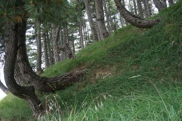 bosco con alberi in italia