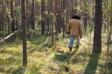 mushroomer collect mushroom on forest