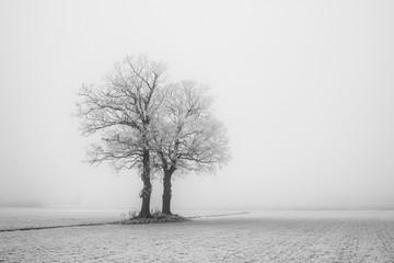 Winterscene, lonely tree