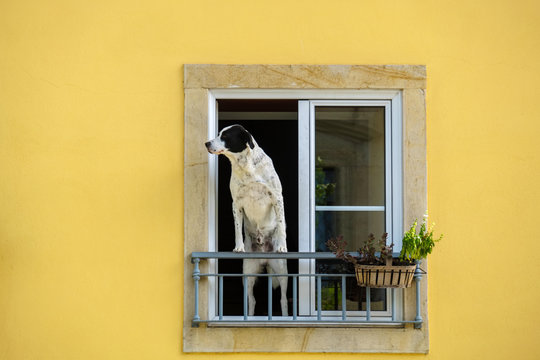 Dog at the window. Portugal