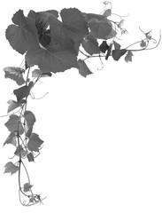 Wall Mural -  fond de vigne en noir et blanc
