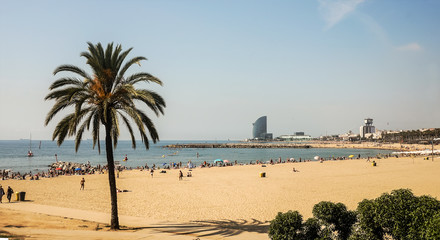 A large sand beach with a high palm and many people catch some rays on the seashore. Shot a sunny...