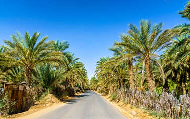Road in oasis at Tamacine, Algeria