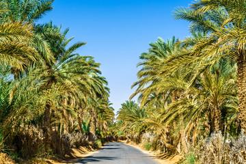 Road in oasis at Tamacine, Algeria