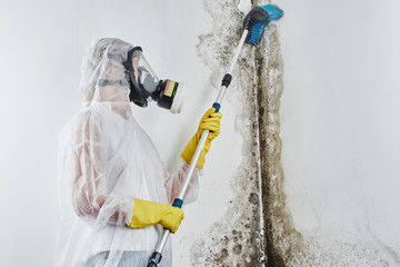 A professional disinfector in overalls processes the walls from mold with a brush. Removal of black fungus in the apartment and house. Aspergillus..