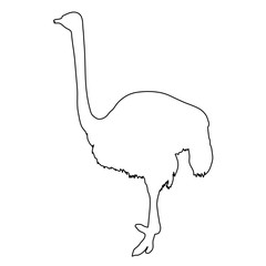 African ostrich standing of black contour curves on white background. Vector illustration.