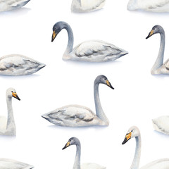 Watercolor illustration of white mute swan. Seamless pattern