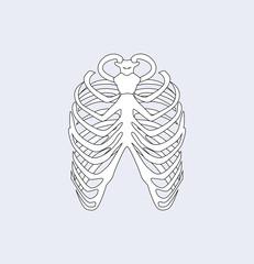 Sternum Bones Ribs White, Vector Illustration
