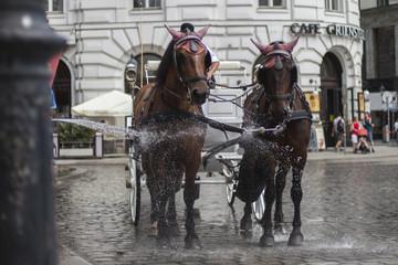 Wasser für Fiaker Pferde, heißes Wetter, Wien, Vienna