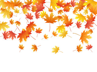 Beautiful maple leaves background seasonal vector illustration. Fall season specific vector.