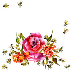 Beautiful, fragrant, decorative rose. Summer, noble flower. Useful, honey bee insects. Watercolor. Illustration