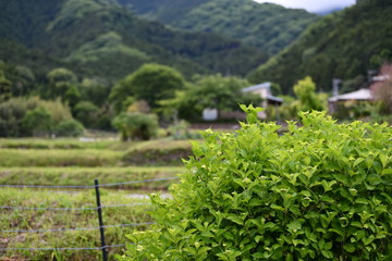 japanese country