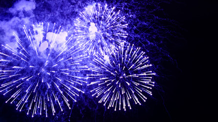 Amazing fireworks flowers on the night sky. Brightly blue fireworks on dark black color background. Holiday relax time with a pyrotechnic show. Festive event accompanied by holiday salves