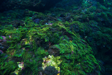 green corals on underwater for snorkel dive travel