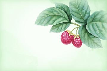 Watercolor illustration of raspberries