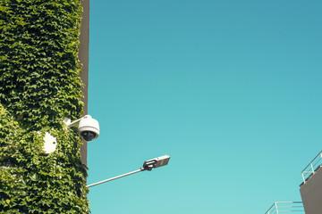 Imagen minimalista edificio cubierto de plantas trepadoras desde abajo. Hay un cielo azul profundo más allá de la escena.