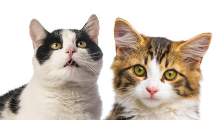 cats close up on white background
