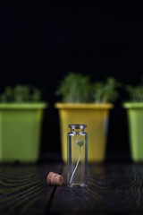 Genetically modified plants concept. Plant seedlings growing inside of test tubes on dark background