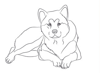 dog lies, lines, vector,