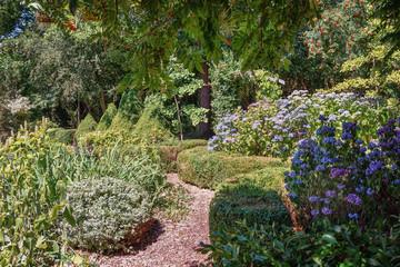 Garden with blooming blue hydrangeas