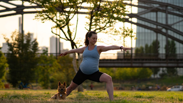 The concept of a healthy pregnancy and yoga. Young pregnant woman with a dog. A pregnant model that makes a prenatal warrior II, virrabhadrasana, two yoga postures
