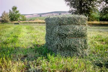 Foto op Canvas Pistache Small Square Alfalfa Hay Bales in Field