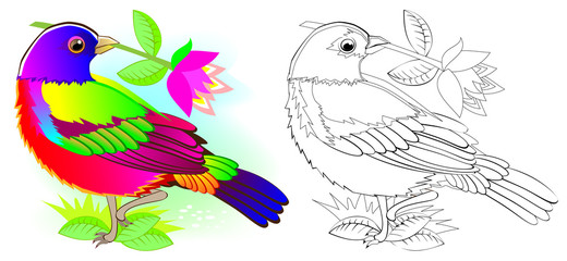 Colorful and black and white pattern for coloring. Illustration of cute painted bunting. Worksheet for children and adults. Vector image.