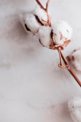 Cotton flower on white marble background from above. Minimal layout